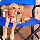 Adopt A Pet :: Pippi