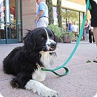 Adopt A Pet :: Ace - Sunnyvale, CA