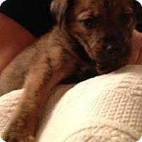 Adopt A Pet :: Baby Iris - Marlton, NJ