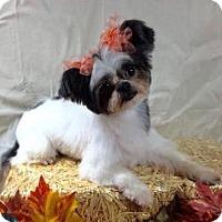 Adopt A Pet :: Kimmie/Oreo - LEXINGTON, KY