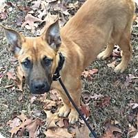 Adopt A Pet :: Jingles - Cranford, NJ