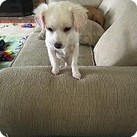 Adopt A Pet :: JASMINE - Mission Viejo, CA