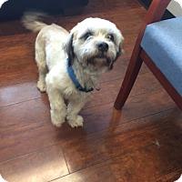 Adopt A Pet :: West - Oak Ridge, NJ