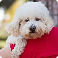 Adopt A Pet :: Jackson - Placentia, CA