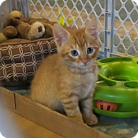 Adopt A Pet :: MoMo - Geneseo, IL