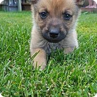 Adopt A Pet :: QUINN - Winnipeg, MB
