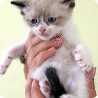 Adopt A Pet :: Ollie - Dalton, GA