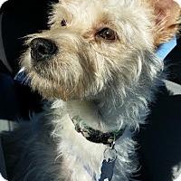 Adopt A Pet :: Victor - Las Vegas, NV