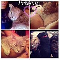 Adopt A Pet :: Mabel - Baltimore, MD