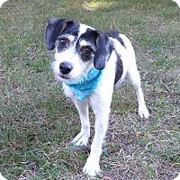 Adopt A Pet :: Zara - Mocksville, NC