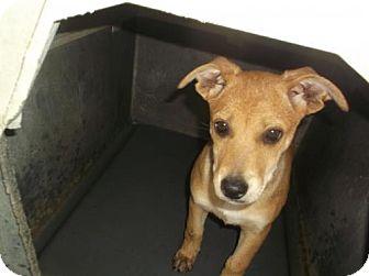 German Shepherd Dog/Rottweiler Mix Puppy for adoption in Bonifay, Florida - Tree