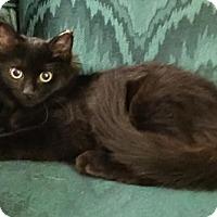 Adopt A Pet :: Cactus - Grove City, OH