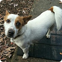 Adopt A Pet :: Milo - Hagerstown, MD