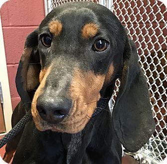 Elivira | Adopted Dog | Hot Springs, VA | Black and Tan ...