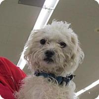 Adopt A Pet :: Bentley - Rocky Mount, NC
