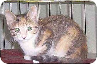 Domestic Shorthair Cat for adoption in Nepean, Ontario - MINETTE