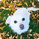 Adopt A Pet :: Tiki