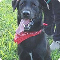 Adopt A Pet :: JOE/Special Summer Pricing - Glastonbury, CT