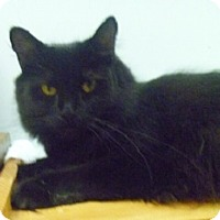 Adopt A Pet :: Charlotte - Hamburg, NY