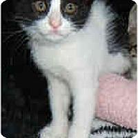 Adopt A Pet :: Panthura - Dallas, TX