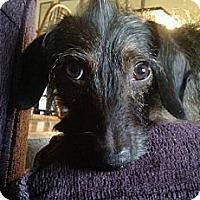 Adopt A Pet :: MAE - Portland, OR