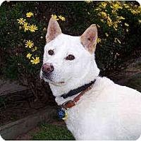 Adopt A Pet :: Kkandori - Southern California, CA