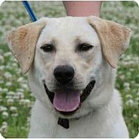 Adopt A Pet :: Jezabel - kennebunkport, ME