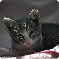 Adopt A Pet :: Jasper - Modesto, CA