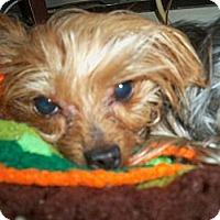 Adopt A Pet :: Taylor - Lorain, OH