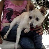 Adopt A Pet :: Honey - Chimayo, NM