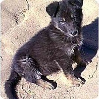Adopt A Pet :: Jasper - dewey, AZ