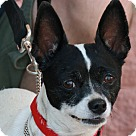 Adopt A Pet :: Chechi
