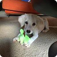 Adopt A Pet :: Carli - Marlton, NJ