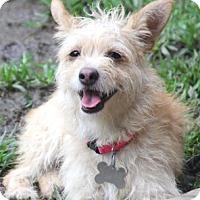 Adopt A Pet :: Tuesday-Meet Her!! - Norwalk, CT
