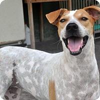 Adopt A Pet :: ISHA - Wonder Lake, IL