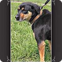 Adopt A Pet :: Carlina - Elizabethton, TN