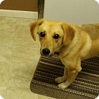 Adopt A Pet :: Tippy - Coldwater, MI