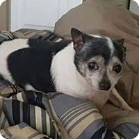 Adopt A Pet :: Cujo 2 - Georgetown, KY