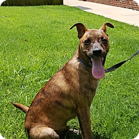Adopt A Pet :: Ace - Arlington, TN