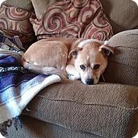 Adopt A Pet :: Jazzy - Brooklyn Center, MN