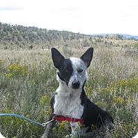 Adopt A Pet :: Wrangler - Ridgway, CO
