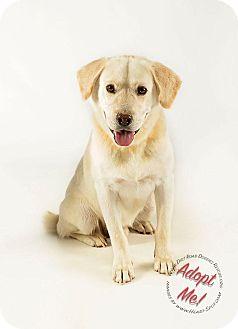 Labrador Retriever Mix Dog for adoption in Gillsville, Georgia - Max