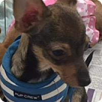 Adopt A Pet :: SAMMIE - Glendale, AZ