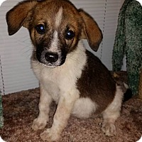Adopt A Pet :: Abby - New Oxford, PA