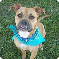 Adopt A Pet :: Clark - Lisbon, OH