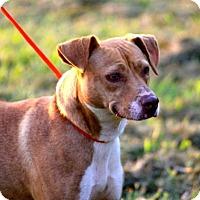 Adopt A Pet :: Jasmine - McKenzie, TN