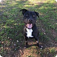Adopt A Pet :: Malibu - Chico, CA