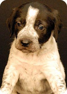 Hound (Unknown Type) Mix Puppy for adoption in Newland, North Carolina - Beeler