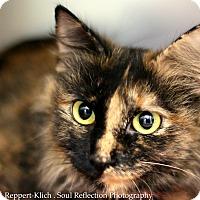 Adopt A Pet :: Kat - Appleton, WI