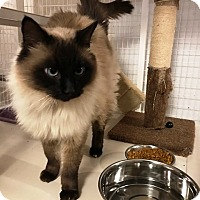 Adopt A Pet :: Mr T - Grand Junction, CO